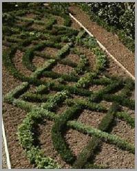 Celtic Knot garden