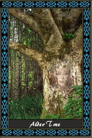 alder tree ogham meanings