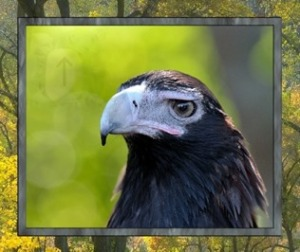 Eagle Meditation