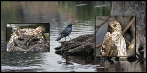 Animal Spirits owl hawk crow