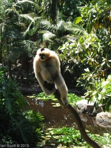 Monkey Spiritual poem