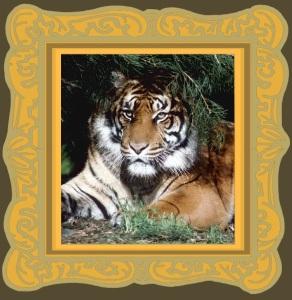 Animal Spirit Guide tiger