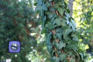 druid alphabet ivy