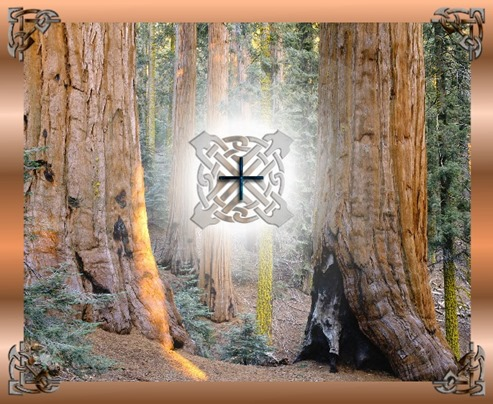 Elm tree ogham meaning