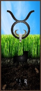 Zodiac Star Sign Taurus
