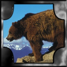 BEAR EARTH MEANING