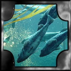 DOLPHINS WATER MEANING