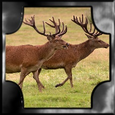 STAG fire element