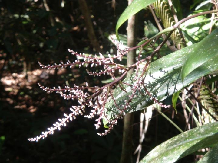 Daintree Rain Forest poems