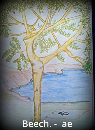 Ogham meanings beech tree