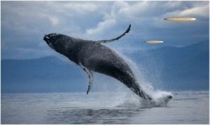 Spiritual Poetry Whale