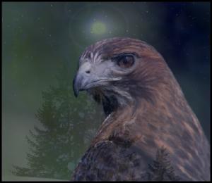 Spirit Animal hawk
