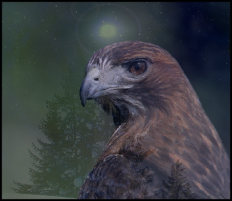 Hawk totem animal
