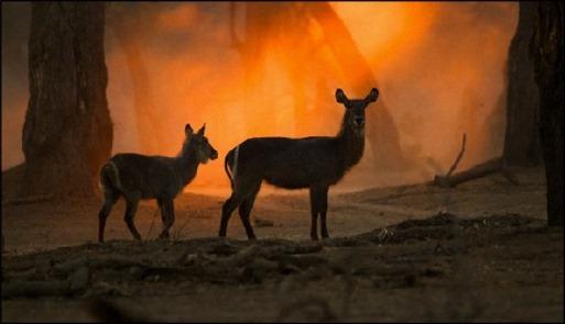 Animal Kingdom Poem
