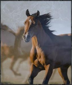 Spirit animal horse