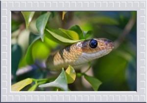 Animal Spirit Snake