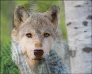 Wolf Spirit Poem