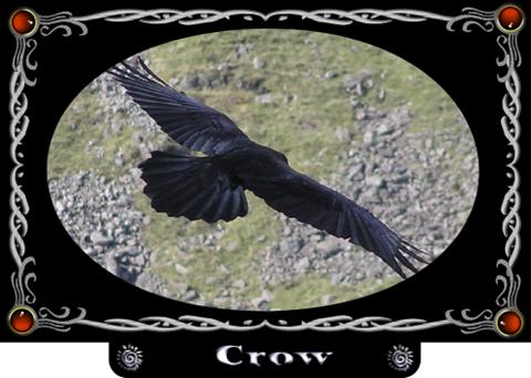 Crow animal spirit guide