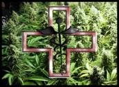 Medicinal Marijuana oil
