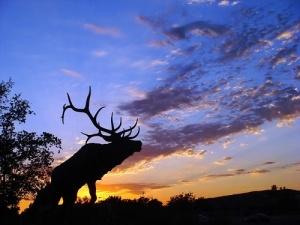 Elk spiritual meaning