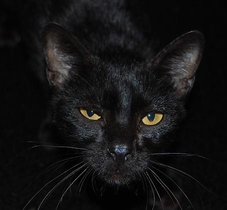 black cat animal spirit meaning