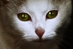 cat animal spirit