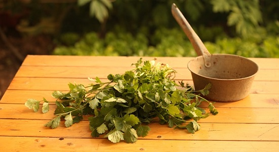 herbs and their uses