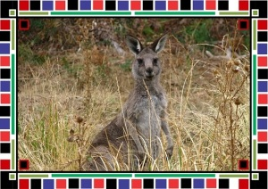 kangaroo totem animal