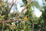 free images bird