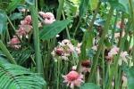 pink flowers free image