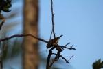 free image bird