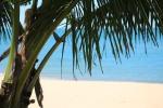 free image palm trees