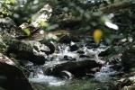 waterfall free image