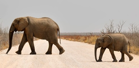 Elephant spirit animal guide