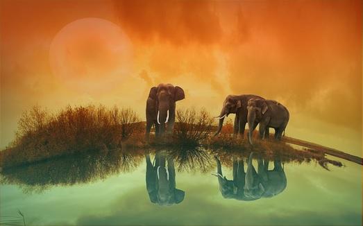 elephant spiritual meaning