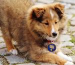 pet protection amulet