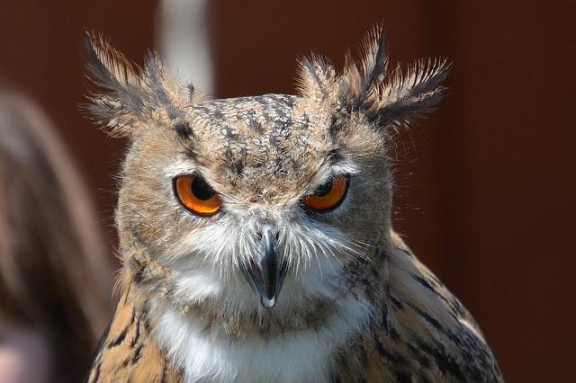 Owl Animal Totem