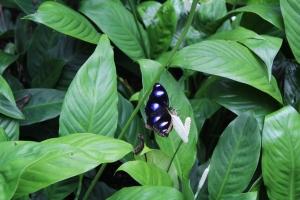 butterfly totem animal