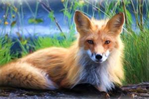 fox totem birth chart